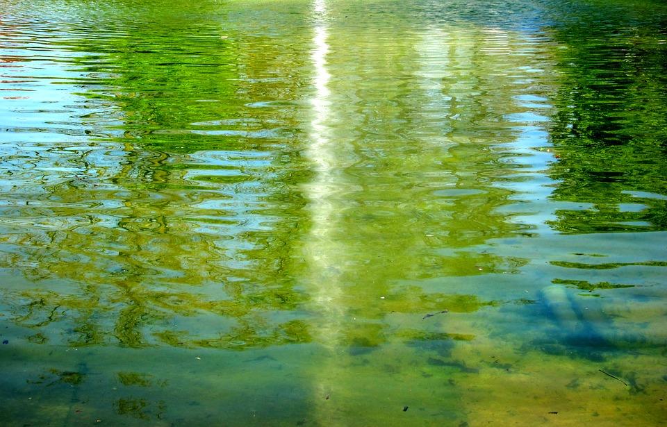 řasa v bazénu