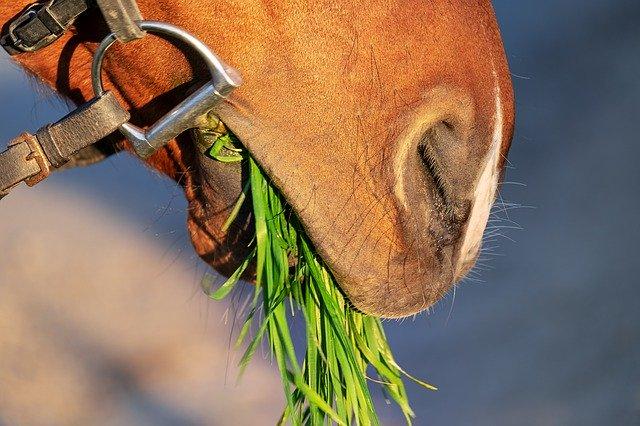 uzda na koně